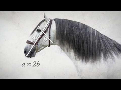 ANCCE | ANCCE presenta el primer tutorial de morfología del caballo de Pura Raza Española