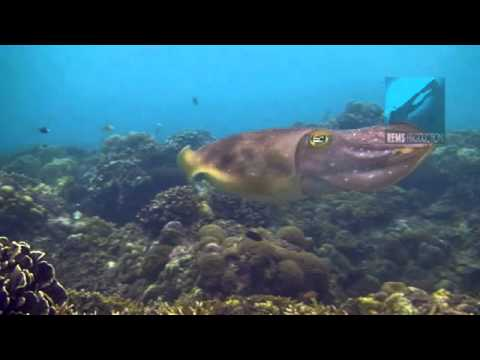 """Underwater video of the dive site """"Coral Garden"""" in Pandan Island, Mindoro, Philippines. Edited with"""