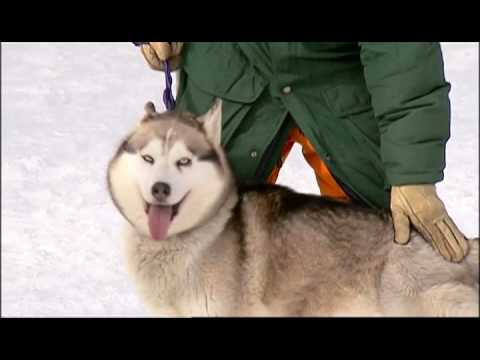 Fish Out of Water Bloopers - Don and the Sled Dogs