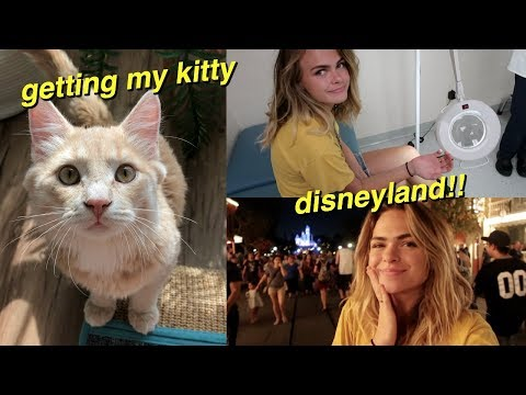 Picking up MY NEW KITTEN! & Getting Stung by a Bee at Disneyland :(