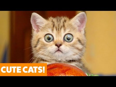 Funny animals - Funny Adorable Cats  Funny Pet Videos
