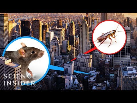 A New York City Exterminator Tells Us The Places He'd Never Live
