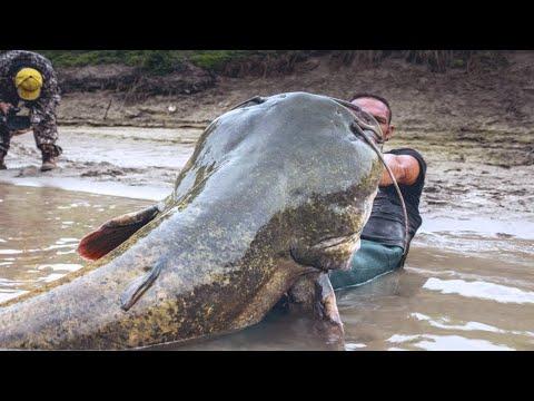 7 Monstruos De Río Más Grandes Y Temidos Del Mundo 😨