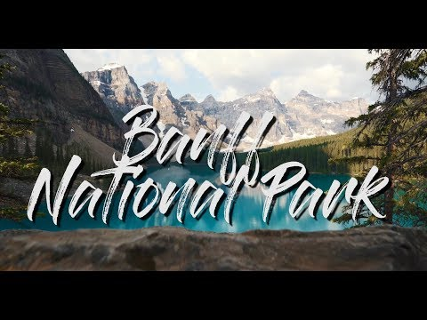 Spotting Grizzly Bears | Banff National Park