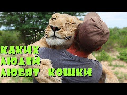 Каких людей любят кошки - DomaVideo.Ru