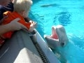 Carter Interacting with a Beluga Whale at Marineland