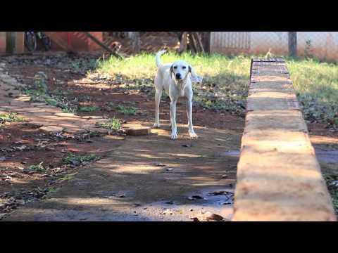 AAANO - Associação Amigos dos Animais de Nova Odessa