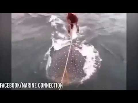 Lướt sóng cùng cá mập