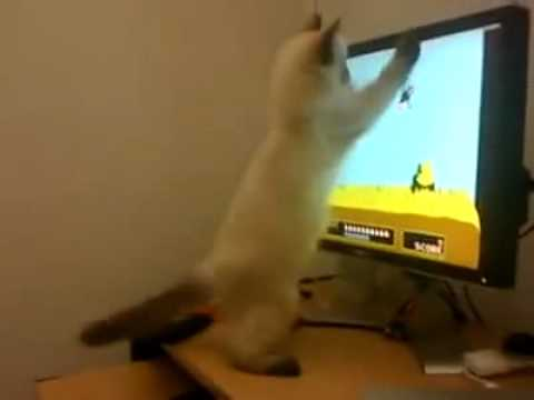 cat-catching-duck-in-tv