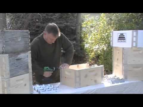 Eco Bee Box (First)
