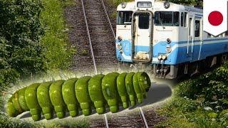 毛虫が電車止める? 線路上に大量発生しブシャー