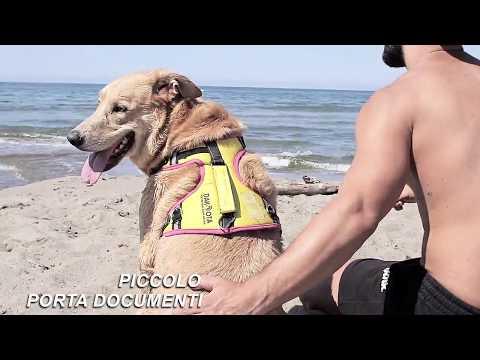 DAKOTA COLLECTION nuovissima pettorina tecnica e comfort per cani