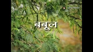 Visit UsWebsite:http://patanjaliayurved.net        http://www.divyayoga.comFacebook:https://www.facebook.com/AcharyaBalkrishanJihttps://www.facebook.com/PatanjaliAyurved Twitter :https://twitter.com/Ach_BalkrishnaYouTube :https://www.youtube.com/user/acharyabalkrishaGoogle +https://plus.google.com/u/0/+AcharyaBalkrishan