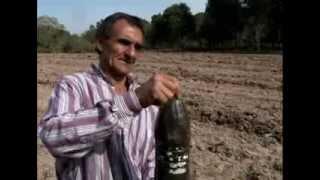 Quintais Orgânicos - Programa Rio Grande Rural