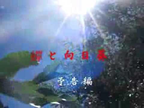 【動画フェス】蟬と向日葵予告編