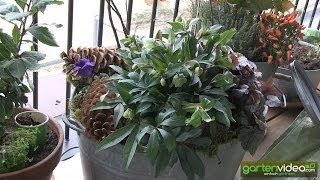 #1419 Sabine Reber motzt Ihre Balkonpflanzen für den Winter auf