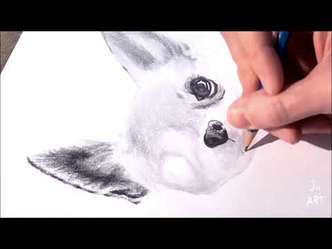 speed drawing realistic dog (chihuahua)