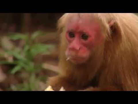 Video Mini Monkeys of Brazil   Storyteller Media download in MP3, 3GP, MP4, WEBM, AVI, FLV January 2017