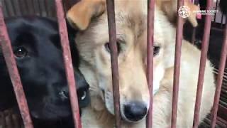 South Korea Dog Meat Market Closed by The Humane Society of the United States