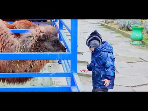 Кормление животных в зооуголке