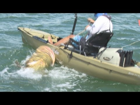fish - Kayaker Jim lands possibly the largest fish ever on a Kayak in Sanibel, Florida on the Chew On This Saltwater Fishing Show with Captain Ben Chancey. You can ...
