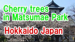 Matsumae Japan  city photos gallery : Japan Travel: Cherry trees in Matsumae Park Sakura festival Hokkaido60 Moopon