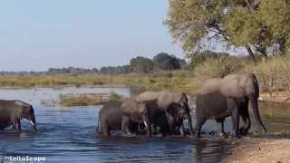 Jul 7, 2013 ... Lori & Bruce in Africa: Elephants crossing the Linyanti River (Namibia ... Family of nElephants Swim Across The Chobe River, Botswana, Africa ...