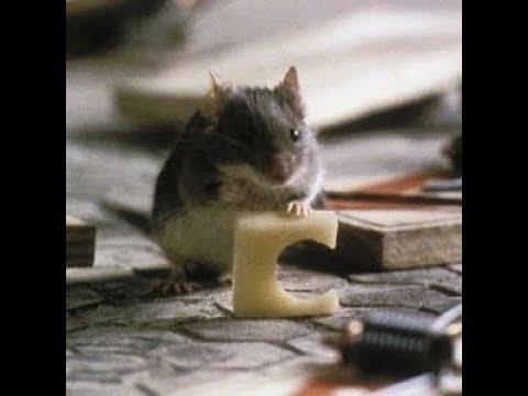 Villain Defeats: Mouse (MouseHunt)