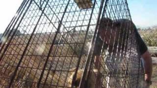 Delta - Dog Rescued today from the Rialto Airport (By Eldad Hagar)