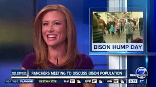 News Anchor Can't Stop Laughing At Bison Hump Day
