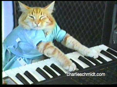 ORIGINAL Keyboard Cat Footage.