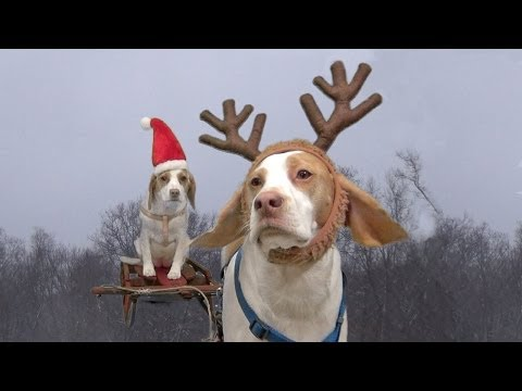 Doggies left alone to ruin Christmas