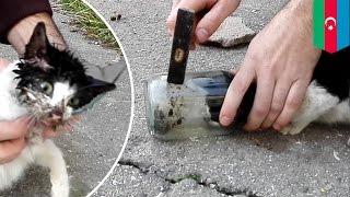 Video Un adorable chat prisonnier d'un bocal de verre est secouru MP3, 3GP, MP4, WEBM, AVI, FLV Juni 2017