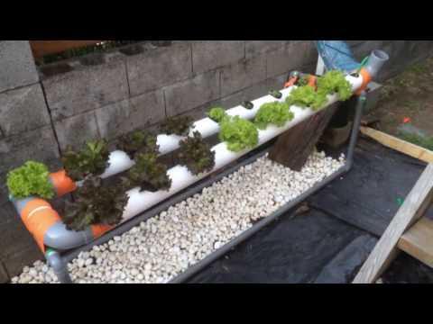 Construire un système hydroponique NFT - culture hors-sol