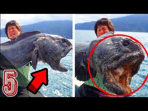 5 creature marine misteriose pescate per caso