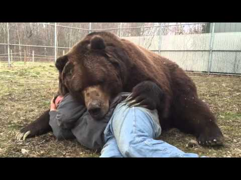 Man Cuddles With Brown Bear