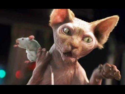 Como Perros y Gatos 2: La Revancha de Kitty Galore (Trailer español)