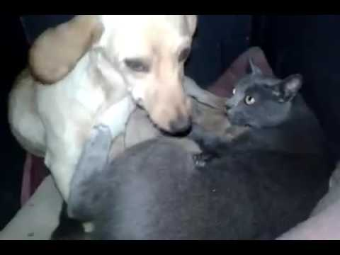Puppies and Kittens Share a Home (Video)