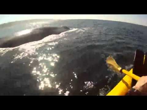 Kajakozz a bálnák között | 5b.hu – maga a szórakoztatás