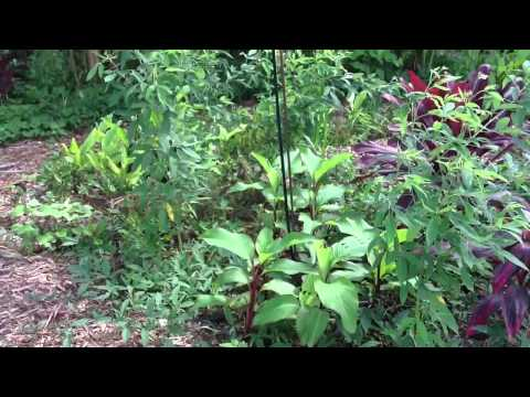 Forest Garden Growth