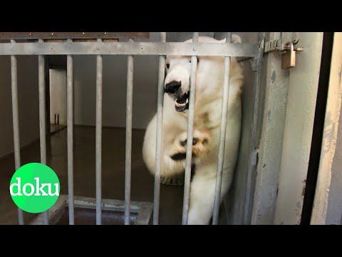 Der Zoo: Tiergefängnis oder Artenschutz? | WDR Doku