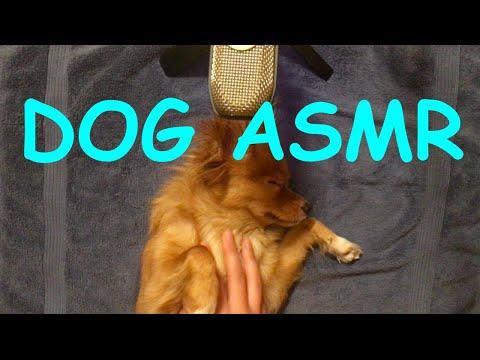 Giving ASMR Dog a RELAXING Massage   ACORN ASMR