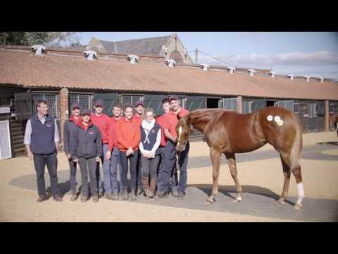 Tattersalls October Yearling Sale Book 1 Day 2 Video Review 2016
