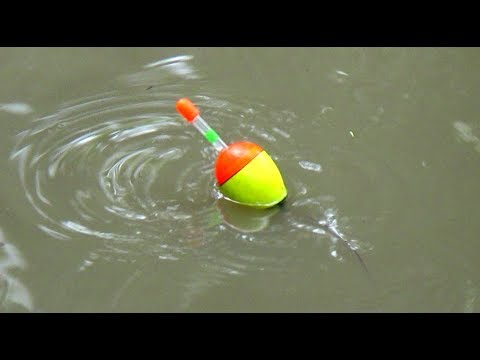 Fishing for big catfish with floats
