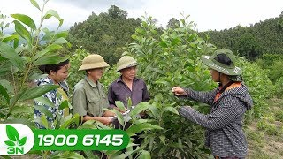 Nông nghiệp | FFF - 3 năm cùng nông dân trồng rừng bền vững
