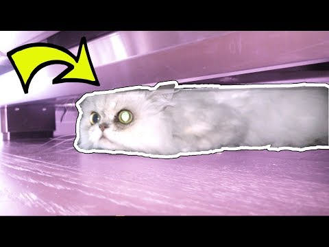 WORLD'S CRAZIEST SECRET HIDING SPOT!!!