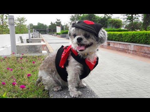 Смешное видео собаками в костюмах