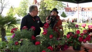 #630 Gartentage Lindau 2012 - Sind Pfingstrosen die besseren Rosen?