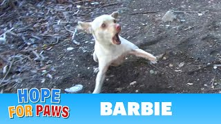 Homeless dog by the freeway is TERRIFIED of humans - the end will blow your mind! by Hope For Paws