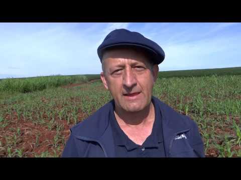 Controle biológico da Lagarta do Milho em Giruá - Programa Rio Grande Rural